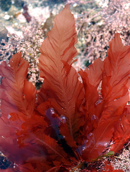 The Seaweed Site